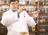 Asian male herbalist doctor weighing Chinese medicinal herbs