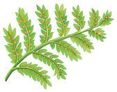 Kapradí rostliny