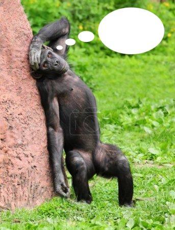 šimpanz s řeči buble