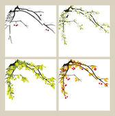 Apfelbaum. Jahreszeiten