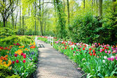 Pestrobarevné tulipány v zahrady keukenhof