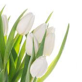 Kytice bílých tulipánů nad bílá