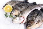 čerstvé ryby na bílém pozadí s ledem a citronem