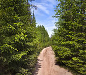 Scenic way road in green coniferous forest