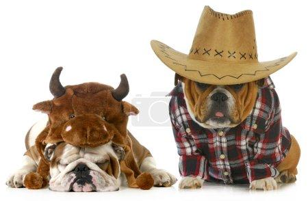 Постер, плакат: Country dog, холст на подрамнике