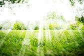 Zelená krajina pozadí s sluníčko a boke