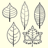 Image of leaves vector isolated on background