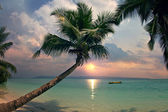 Sunset on beautiful tropical beach with palms and boat on water