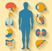 Plochý design ikony pro zdravotní téma. lidské anatomie, rozsáhlou sbírku lidských orgánů