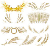 Wheat ears collection