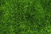 Una texture erba verde dallalto