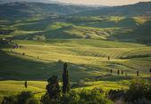 Zelené louce v toskánské krajině při západu slunce