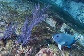 Gorgonia korálů na temně modrý oceán
