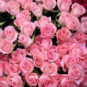 Sfondo di rose rosa della mia serie di sfondi floreali
