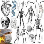 Selezione del medicali e anatomici di oggetti e figure per ritaglio