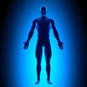 Leere Haltung vorne - blau medizinischen Standpunkt