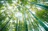 Bambusové lesy