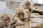 Wütend Schnee Affe