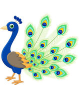 Peacock cartoon illustration on white background