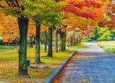 Podzim laves v Hirošimě central parku v Japonsku