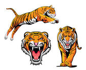Tigris illusztráció készlet