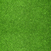 Trama bella erba verde campo da golf