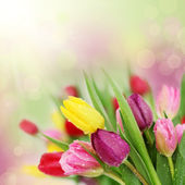 Tavaszi tulipán virág