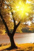 Autumn scene with ray of light