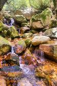 Little mountain river waterfall