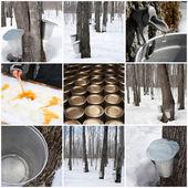 Výroba javorového sirupu