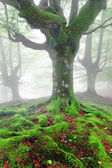 Twisted tree roots with moss on forest