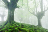 Trees with vivid green roots and moss