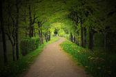 Mystical path through a dark forest