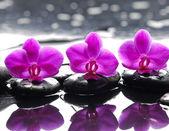 Orchidee blume