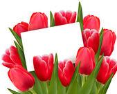 červené tulipány a prázdné karty. vektor