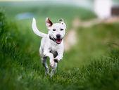 Colpo del cane di razza pura. preso fuori in una giornata di sole estivo