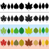 A vector set of different types of leaves