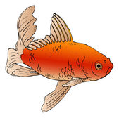 Illustration depicting a goldfish swimming