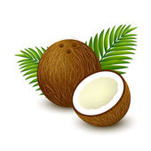 Brown whole coconut with piece and leaves on white background Vector illustration