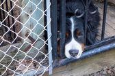 Sad dog poking his head through the fence