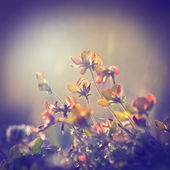 Plants and flowers on vintage background