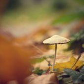 Mushroom vintage background