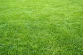 Zöld fű mező