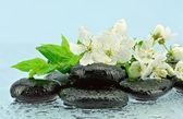 Švestkové květy na kameny pro spa