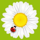 Vector daisy flower isolated