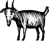 Woodcut illustration of Goat