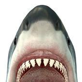 Weißer Hai Rachen