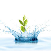 Water with leaf growing