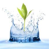 Stříkající vodě s listy
