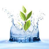 Wasser mit wachsendem Blatt